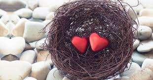 Petit nid d'Amour